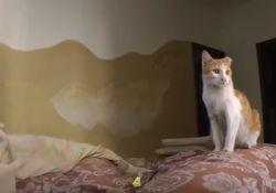 فیلم مستند نبرد با شیطان     www.filimo.com/m/dJ1Hx
