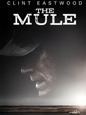 مول - The Mule - فیلم , دانلود , زیرنویس,  دانلود فیلم مول , مول , دانلود مول ,فیلم مول , دانلود فیلم  , مول , زیرنویس فیلم مول , 2018 , l,g ,  مول 2018 , The Mule , The Mule 2018 , دانلود The Mule , زیرنویس The Mule , دانلود The Mule , فیلم The Mule , دانلود فیلم The Mule , دانلود زیرنویس The Mule , تماشای آنلاین , کلینت ایستوود ,  Clint Eastwood ,Bradley Cooper ,Laurence Fishburne ,Michael Peña ,Dianne Wiest ,Andy García , ,اکشن,پلیسی - معمایی, فیلم سینمایی , سینما ,  دانلود فیلم , دانلود فیلم مول - محصول آمریکا - - - سال 2018 - کیفیت HD