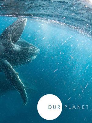 سیاره ما - فصل 1 قسمت 6 : دریای آزاد