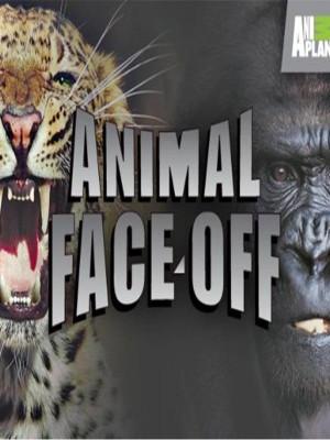 Animal Face Off - Saltwater Crocodile vs. Great White Shark