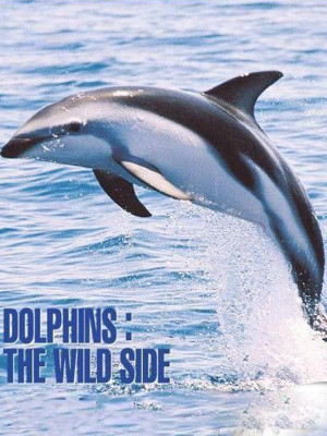 Dolphins The Wild Side