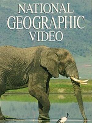 بازتاب فیل ها
