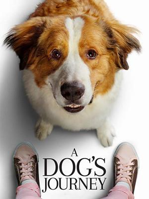 سرگذشت یک سگ - A Dogs Journey