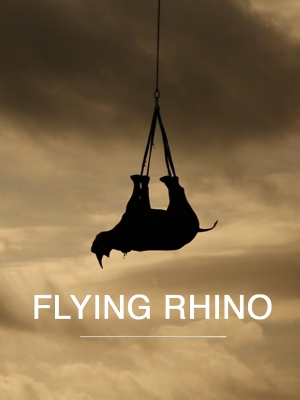 Flight of the Rhino