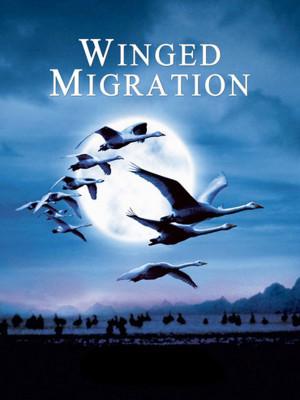 مهاجرت پرندگان - Winged Migration