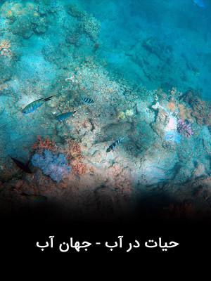 حیات در آب - جهان آب