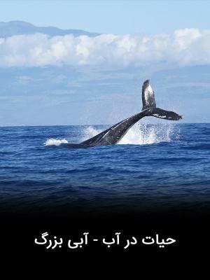 حیات در آب - آبی بزرگ