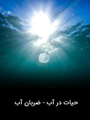 حیات در آب - ضربان آب