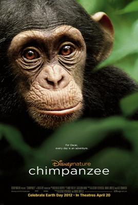 شامپانزه - Chimpanzee